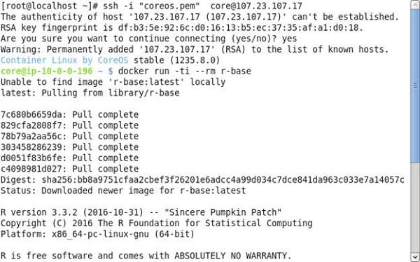 Using a Docker Image to run R
